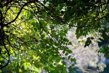 echoes: foliage echoes growing in the woods in the park