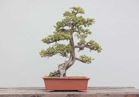 bonsai: a wide variety of bonsai plants are placed in the flower garden