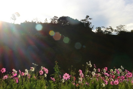 scenary: nature scenary with white pink and purple flowers Stock Photo