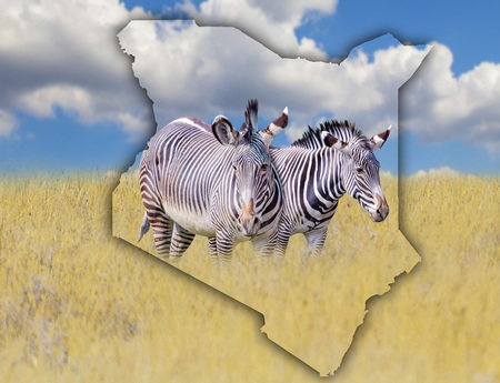 Flag Map of Kenya on which is a picture of a zebras. It's a wild animal living in Africa. It is national african background. There is golden grass and blue sky. There is summer time. Banco de Imagens