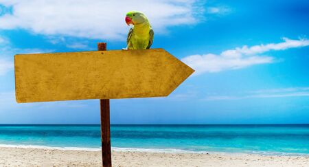Wooden sign with empty place for your text on a beautiful beach and clear sea . A green parrot sits on a pointer to a tropical paradise. There is summer time.