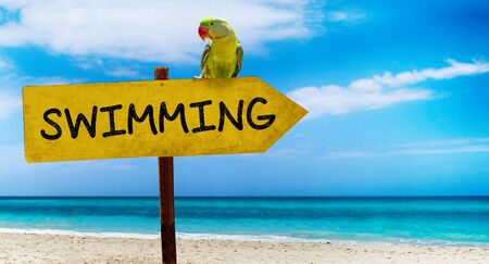 Wooden sign on beautiful beach and clear sea wit text swimming A green parrot sits on a pointer to a tropical paradise. There is summer time.