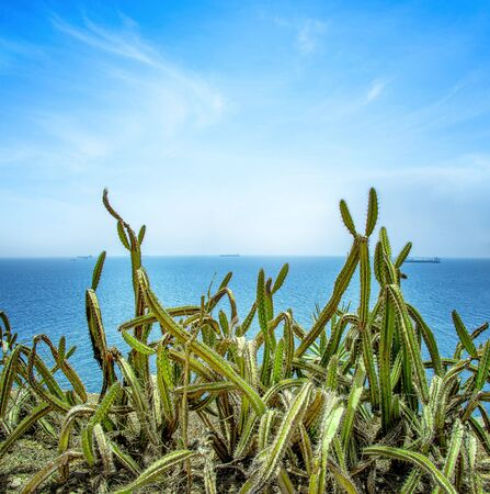 A large cactus or other succulent on top of a cliff.. In the background is the blue Atlantic Ocean. It is on the island of Goree in Senegal, Africa. 스톡 콘텐츠