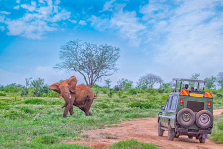 People on safari watch an elephant from off-road car in Tsavo East, Kenya. It is a wildlife photo from Africa.