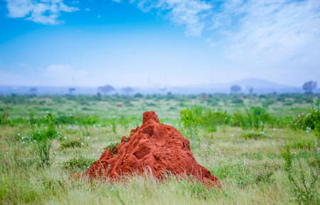 Big termite mound in Tsavo East Kenya. It is a wildlife photo from Africa.