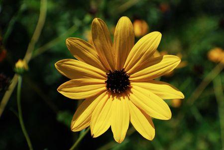 Seasonal Yellow Flower