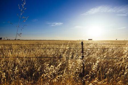rule of thirds: Barbwire fence surrounding wheat field