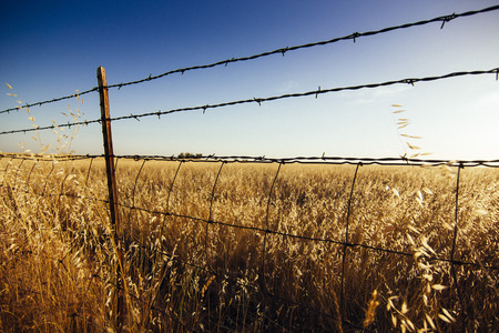 rule of thirds: Barbwire fence surrounding wheat field angled Stock Photo