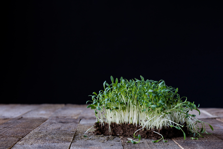 Cress on old kitchen table, black background, old boards