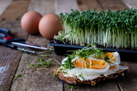 Cress and boiled egg on an old wooden table in kitchen. Black background.