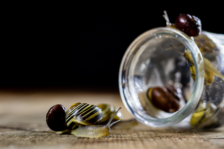 Colorful snails big and small in a glass jar. Wooden table, black background