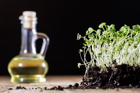 berro: Fresh sprouts Cress. Black ground. Wooden table. Black background. Flowerpot in the shape of a watering can. Foto de archivo
