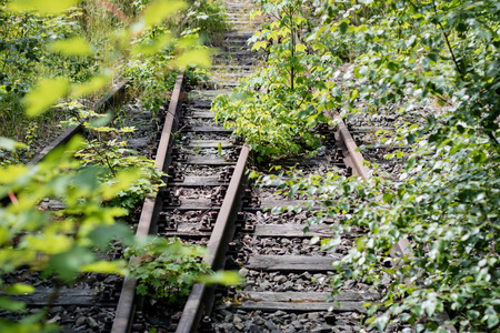Old railway tracks overgrown with trees. Forgotten railway line. Season of the summer. Stock Photo