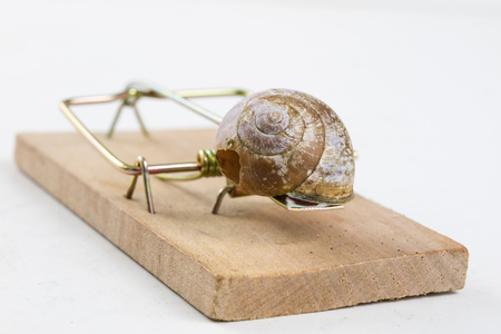 Mousetrap and empty damaged snail shell. The developer's trap is figuratively. White background.