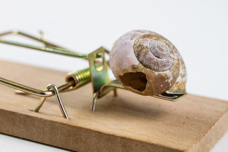 Mousetrap and empty damaged snail shell. The developers trap is figuratively. White background.