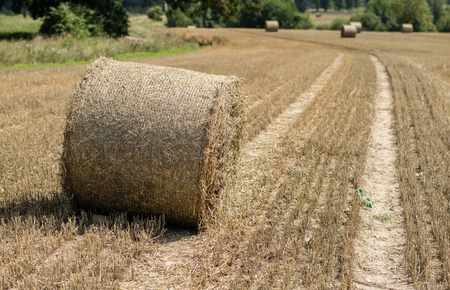 Mowed straw on an empty field. Round sheaves of straw on the stubble. Season of the summer.