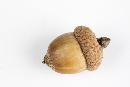Tree seeds called an oak on a white table. Acorns stacked next to each other. White background.