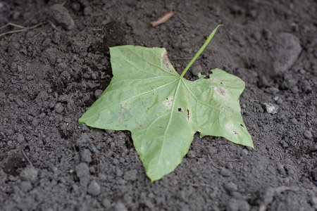 Hoja de un árbol sobre un suelo arenoso. Paisaje otoñal en el parque. Temporada del otoño.