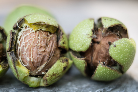 Ripening walnuts in shell. Fruit ready for harvesting on a wooden table. Season - autumn.