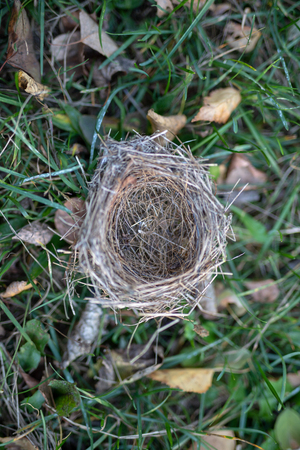 A wild bird's nest laid out on the grass. Nesting place for wild birds in the forest. Season of the autumn.