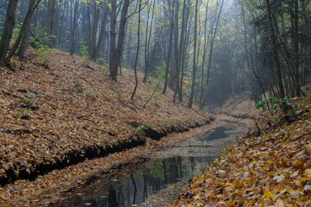 A river flowing in a ravine. Leaves of deciduous trees fall to the ground and water in a row. Season of the autumn.