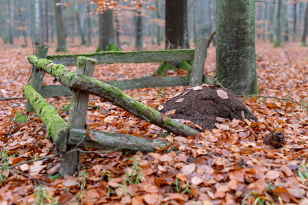 The anthill fenced with old wooden pegs. Misty scenery in a mysterious misty forest. Season of the autumn. Banque d'images - 112528341