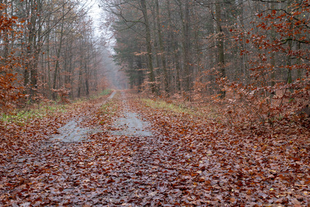 A road leading in a deciduous forest. Misty scenery in a mysterious misty forest. Season of the autumn.