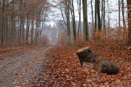 A path leading in a deciduous forest by a pile of trees. Misty scenery in the morning in a mysterious forest. Season of the autumn. Stock fotó