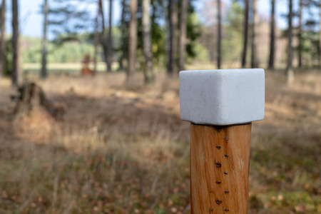 A salt cube prepared for forest animals. Lick in the forest near the pasture. Season of the autumn. Stok Fotoğraf