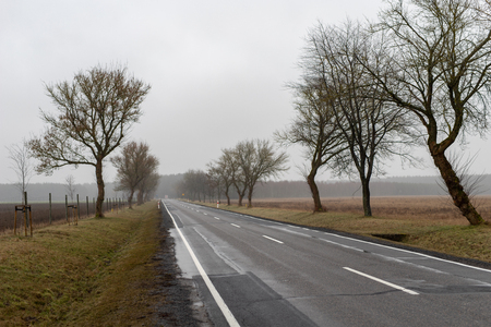 Asphalt road in a misty atmosphere. Road and small trees on the side of the road. Season winter.