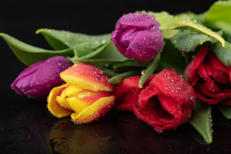 Wet tulip flower on a dark wet table. A bouquet of flowers with water. Dark background. Stock Photo
