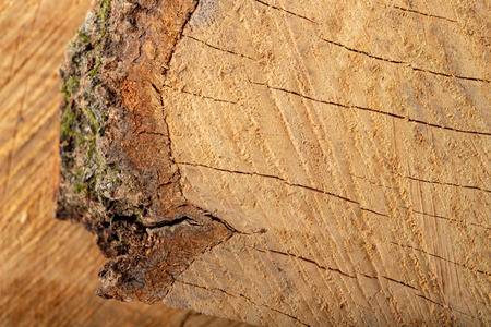 The texture of hardwood. Cross-section of a beech tree trunk. Light background. Archivio Fotografico