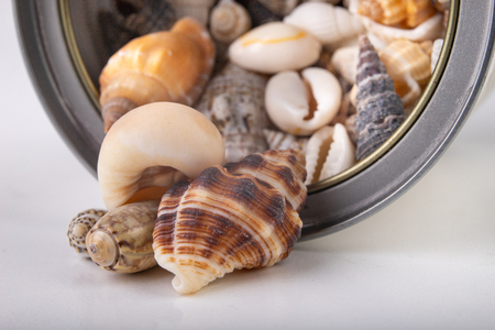 Small snail shells sprinkled out of the can. Shells in a metal container. White background.