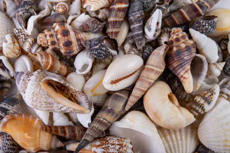 Various snail shells poured onto the table. Colorful shells of molluscs. White background.