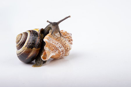 Live snail and empty mushes left on a light table. Snail in search of a new home. Autumn background.