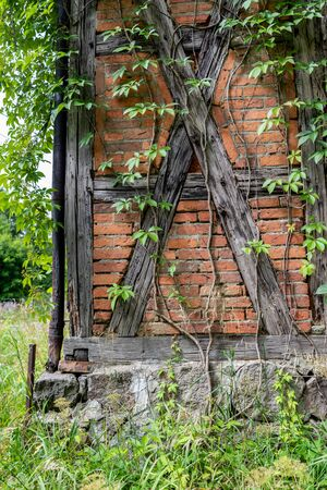 An old house in the countryside overgrown with green ivy. Walls built in the Prussian wall technology, covered with vegetation. Season of the summer. 版權商用圖片