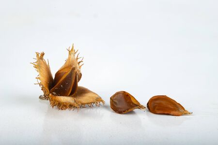 Beech tree fruit on a light table. Seeds of the deciduous tree. Light background.