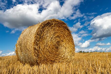 Straw pressed into round sheaves. Straw after mowing in bales in the field. Season of the summer.