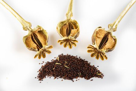Cut dry poppy heads and poppy seeds. Poppy seed for homemade baking. Light background.