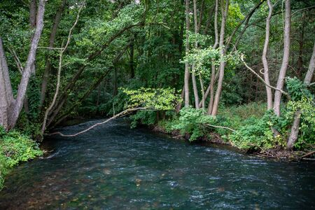 River in deciduous forest in Pomerania. A small river in Central Europe. Summer season.