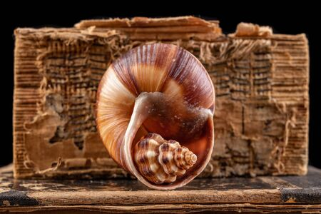 A small snail shell arranged in a large shell. Mollusk shell on the old book cover. Dark background. Фото со стока