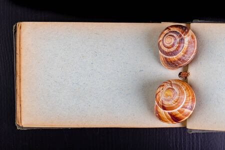 Empty snail shells on a blank diary book page. Shells of mollusks on an old notebook. Dark background. Stockfoto - 130067101
