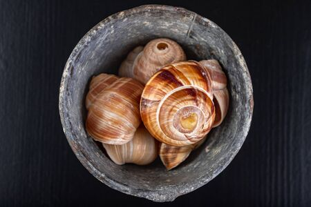 Empty snail shells in a metal container. Colorful shells on a dark table. Black background.