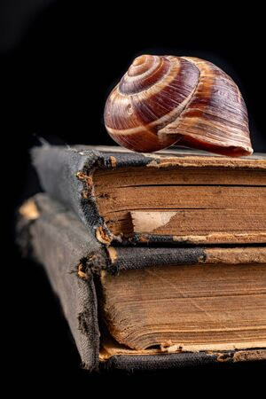 Empty snail shells on an old book. Mollusk shell on the cover of the book. Dark background.