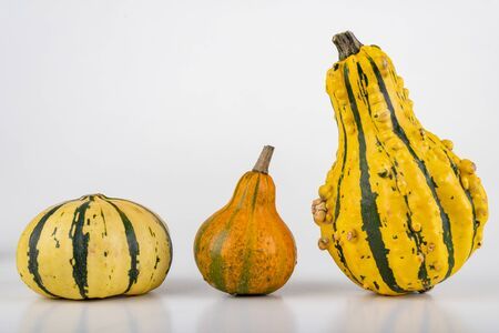 Decorative pumpkin on a white table. Vegetables grown in a home garden. Light background.