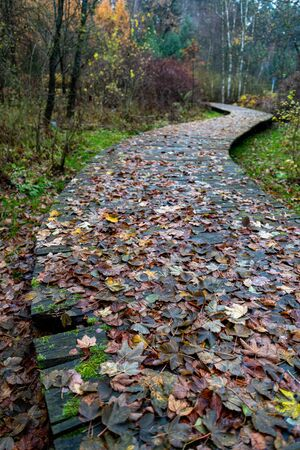 A wooden bridge leading through the park. A twisted bridge in a deciduous forest. Autumn season.