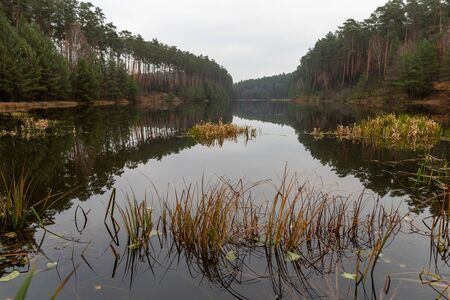 Hazy lake and coniferous forest. Calm water surface above the backwaters. Autumn season.