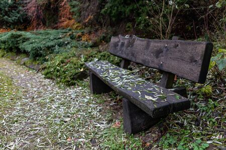Black wooden bench in the park. A path covered with leaves and a place to rest. Autumn season.