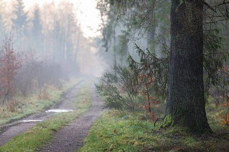Bosweg in de mist. Pad dat door het bos leidt. Herfstseizoen. Stockfoto