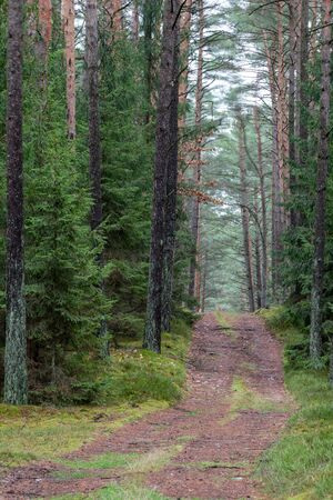 A forest road in a coniferous forest. Forest vista leading among trees in Central Europe. Autumn season. Stock Photo